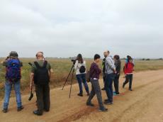 Fins a 50 espècies d'ocells observades a la sortida de descoberta de la Timoneda d'Alfés