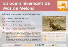 Sortida ornitològica: Els ocells hivernants de Mas de Melons