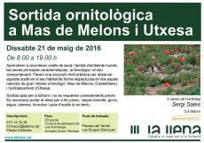Sortida ornitològica a Mas de Melons i a Utxesa