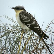 Bones observacions ornitològiques a la sortida i al taller d'anellament a Mas de Melons