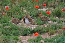 Anem de sortida ornitològica a Mas de Melons i Utxesa