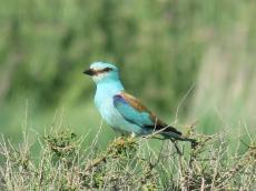 Èxit de sortida ornitològica pels secans