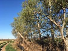 Vigilància ambiental de la restauració fluvial a la Séquia del Poble a Linyola