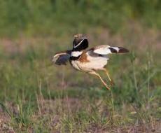 Taller d'iniciació a l'ornitologia